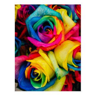 Rosas do arco-íris cartão postal