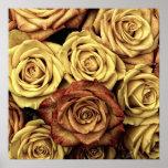 Rosas do vintage posteres