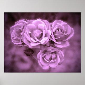 Rosas do vintage roxos posters