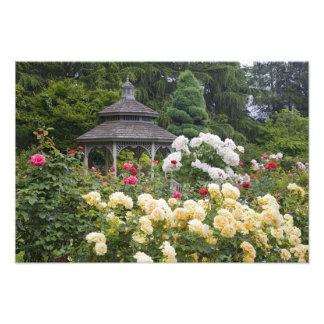 Rosas no jardim de rosas da flor e do miradouro no impressão de foto