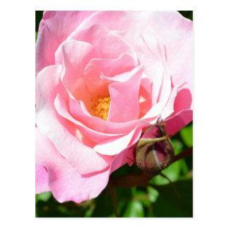 Rosas românticos cartão postal