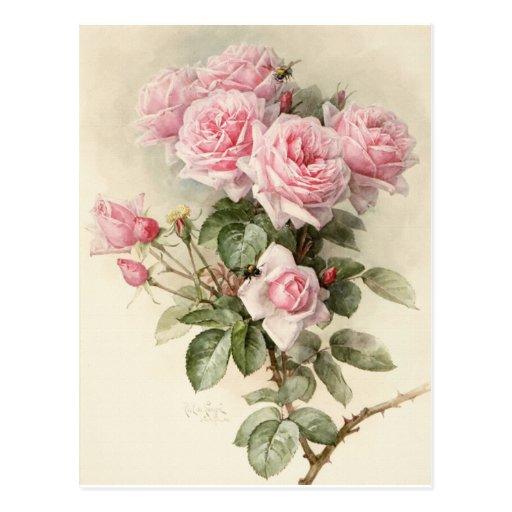 Rosas românticos do Victorian do vintage Cartao Postal