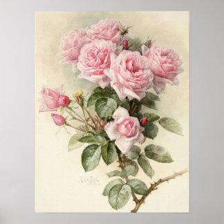 Rosas românticos do Victorian do vintage Pôsteres
