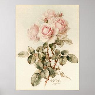 Rosas românticos do Victorian do vintage Pôster