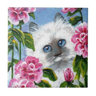 Rosas Siamese Creationarts do gato de Ragdoll do