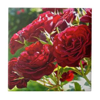 Rosas vermelhas azulejo quadrado pequeno