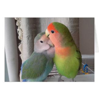 Roseicollis do agapornis do cartão do Lovebird