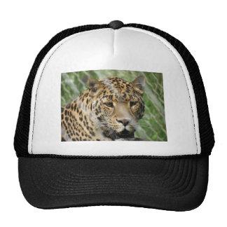 roupa do leopardo boné