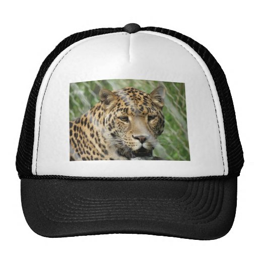 roupa do leopardo bonés