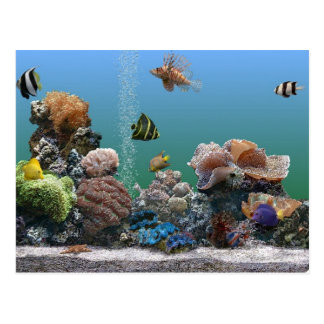 rsvp do aquário cartão postal