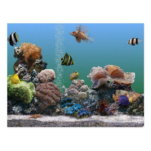 rsvp do aquário cartões postais