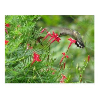 Rubi-garganta no cartão da videira de Cypress