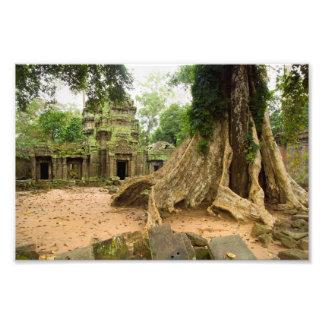 Ruínas do templo de Ta Prohm em Cambodia Impressão De Foto