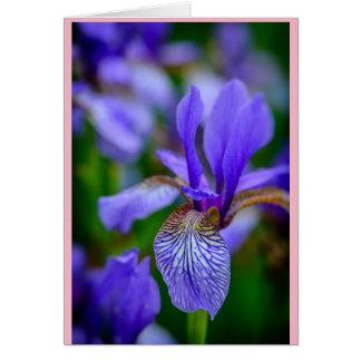 Sabido como uma flor do nascimento de fevereiro a cartão comemorativo