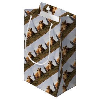 Sacola Para Presentes Pequena Vaca de Luing na ilha de Islay, Scotland