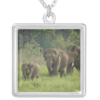 Saída da família do elefante indiano colar com pendente quadrado
