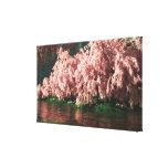 Sakura Impressão De Canvas Envolvidas