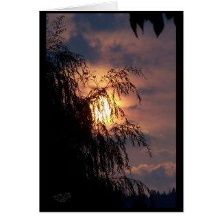 Salgueiro Weeping no cartão do nascer do sol