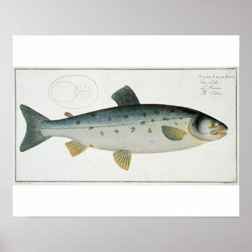 (Salmo Salar) placa Salmon XX 'de Ichthyologie, Poster