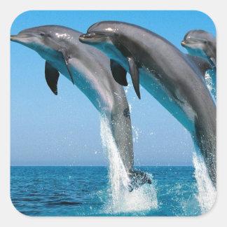 saltar dos golfinhos de bottlenose do mar azul adesivo em forma quadrada