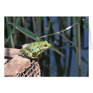 Salto - cartão do sapo verde