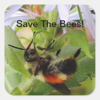 Salvar a etiqueta macro da foto das abelhas adesivos quadrados
