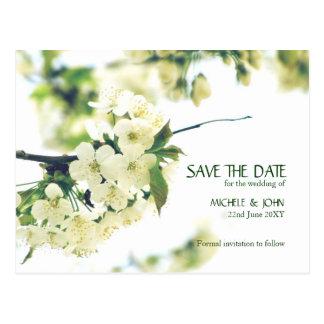 Salvar o cartão branco da flor de cerejeira da
