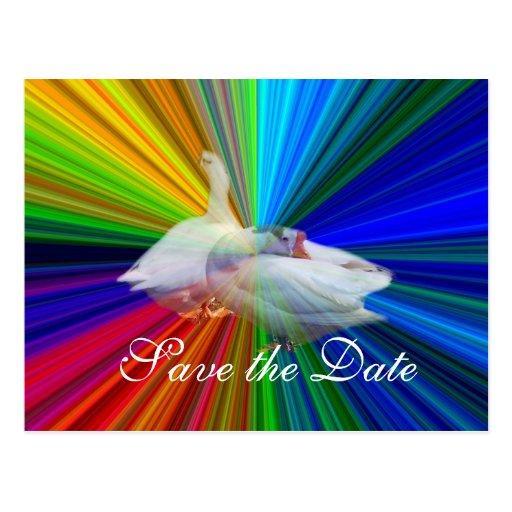 Salvar os gansos do branco de date.two cartões postais