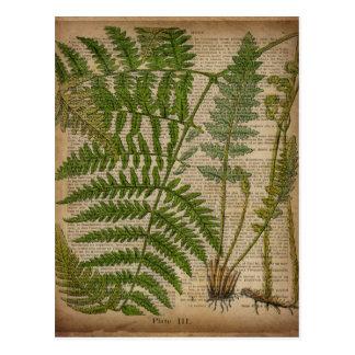 samambaia botânica francesa do impressão da folha cartão postal