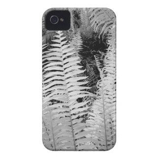 Samambaia de couro gigante selvagem, Florida, EUA Capinha iPhone 4