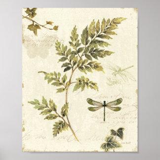 Samambaias decorativas e uma libélula pôster