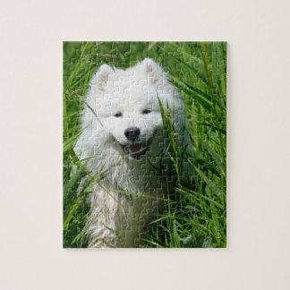 Samoyed no quebra-cabeça da grama