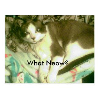 sapato de neve que Neow? gatinho que coloca na Cartão Postal