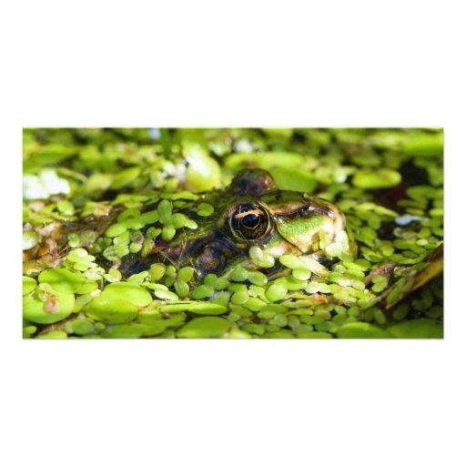 Sapo comestível Pelophylax quilolitro. Esculentus Cartão Com Foto Personalizado