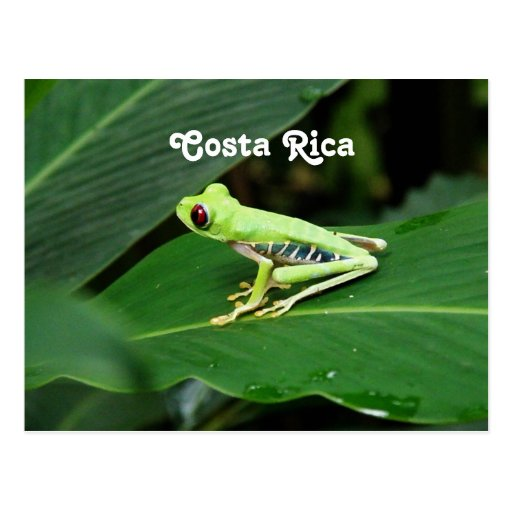 Sapo de árvore de Costa Rica Cartões Postais