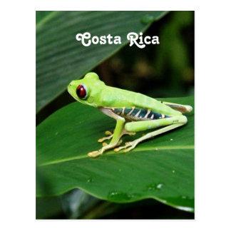 Sapo de árvore de Costa Rica Cartão Postal