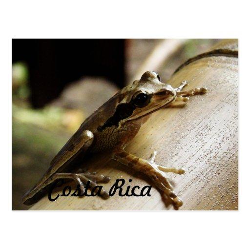 Sapo de Costa Rica Cartoes Postais
