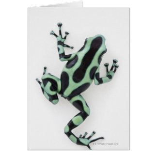 Sapo preto e verde 2 do dardo do veneno cartão comemorativo