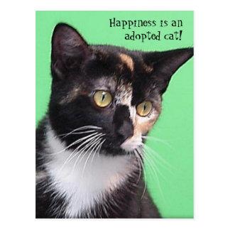 Sara - a felicidade é um gato adotado! Cartão