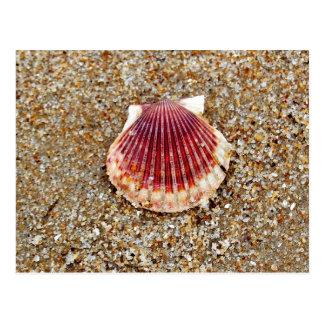 Scallop Shell - cartão