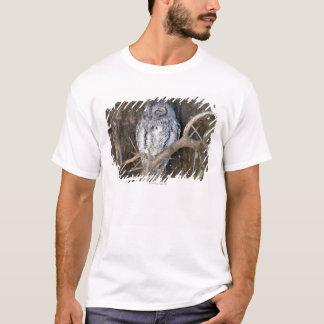 Scops-Coruja africana, parque nacional de Kruger, Camiseta