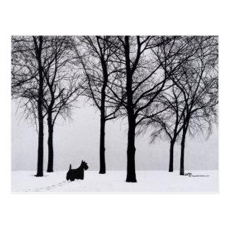 Scottie em madeiras nevado cartões postais