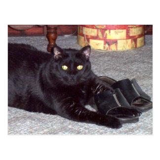 """""""Se os calçados cabem"""" o cartão do gato"""