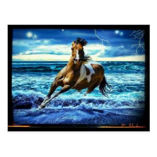 Sea horse cartão postal