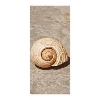 SeaShell 10.16 X 22.86cm Panfleto