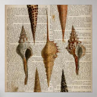 seashell botânico do impressão do vintage francês