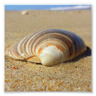 Seashell na areia 2 impressão de foto