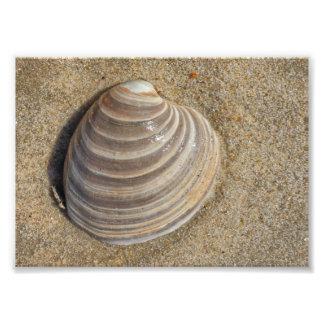 Seashell na areia 3 impressão de foto