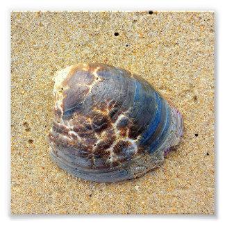 Seashell na areia impressão de foto