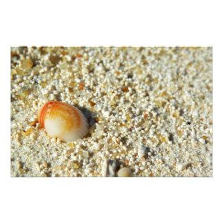 seashell papelaria